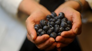 The University of Mississippi's Division of Technology Management has been jointly awarded a a Technology Transfer Award for their work to develop, study and bring to market pterostilbene, a compound found in blueberries, grapes and other small fruits.