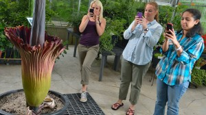 Natural Product Center researchers Olivia Dale, Katherine Martin and Iffat Parveen photograph the Titan Arum, also known as the corpse flower, that is blooming at the Medicinal gardens greenhouse.