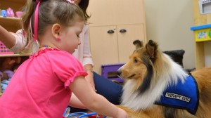 Rook, a Sheltie therapy dog, joins CAPTI with owner Jennifer Main, a licensed counselor and play therapist.