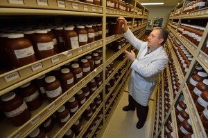 The National Center for Natural Products Research maintains a repository with more than 18,000 natural product specimens, derived extracts and pure compounds. Photo by Robert Jordan/Ole Miss Communications
