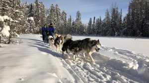 Ole Miss Outdoors' Dog Sledding Trip a Howling Good Time