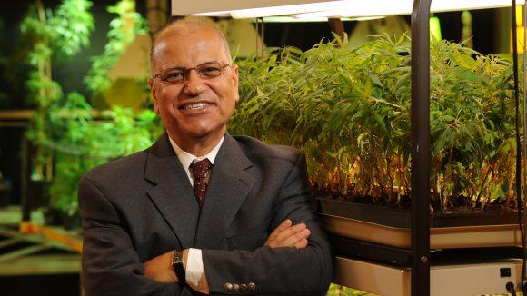 Federally Funded Marijuana Turns 50